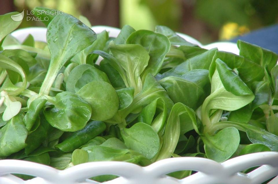 Ingrediente songino le ricette dello spicchio d 39 aglio for Songino valeriana