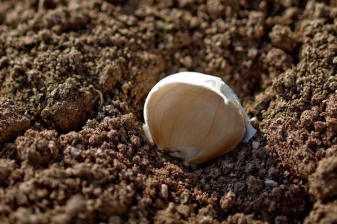 16/11/08: Aj a Caraj, quando la festa sa di aglio