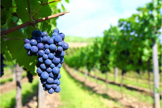 Dal 26 al 28 settembre a Chiusi vi aspetta la Festa dell'Uva e del Vino 2014