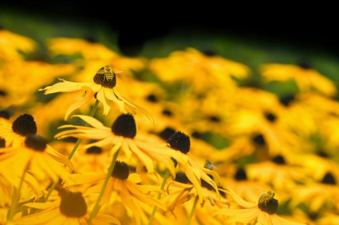 Festa della Biodiversità e del Miele in Terra di Lavoro: il 7 dicembre a Marzano Appio